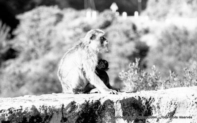 [NB055-1978-22] Gorges de Kherrata - Magots