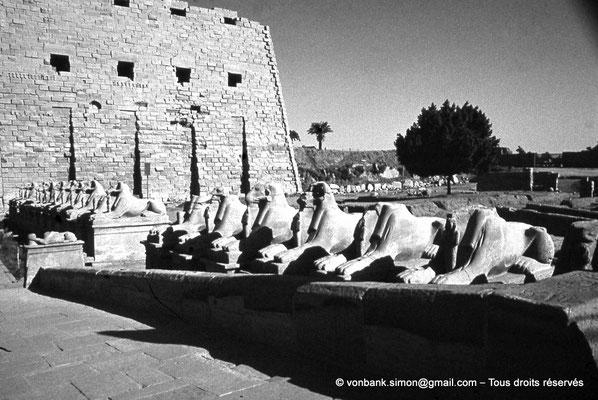 [088-1973-39] Karnak - Parvis du Temple : De chaque côtés de l'entrée principale, 20 sphinx criocéphale (lion à tête de bélier) nous conduisent vers le premier pylône - ils portent les cartouches de Ramsès II