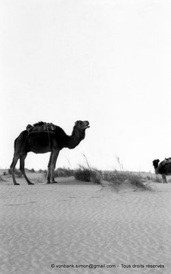 [NB014-1981-05] Djamaa - Dromadaires
