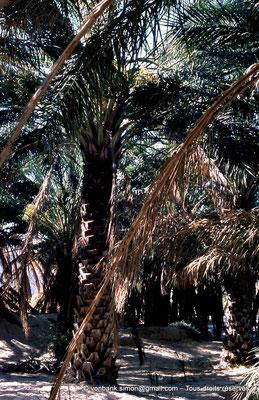 [044-1978-18] El Oued