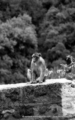 [NB055-1978-11] Gorges de Kherrata - Magot