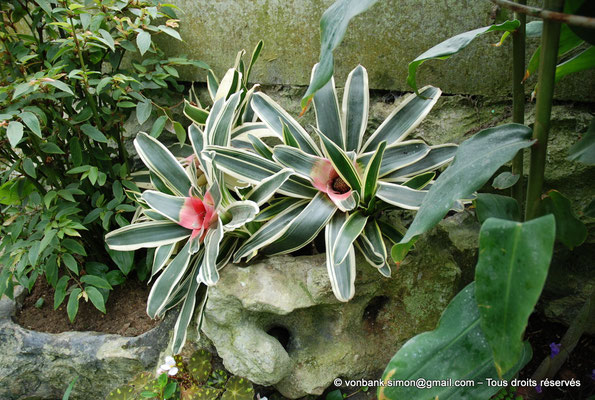 [NU900c-2012-0048] B - Bruxelles - Laeken : Serres royales - Jardin d'hiver