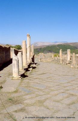 [001-1983-22] Djemila (Cuicul) :  Devant les grands thermes, colonnade de la grande rue prolongée en dehors de la ville primitive