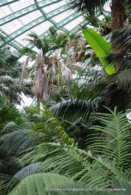 [NU900c-2012-0236] B - Bruxelles - Laeken : Serres royales - Jardin d'hiver