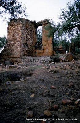 [006-1983-18] Sidi Ali-Bel-Kassem (Thuburnica) : Ruines dans l'olivaie
