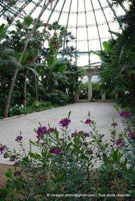 [NU900c-2012-0241] B - Bruxelles - Laeken : Serres royales - Jardin d'hiver