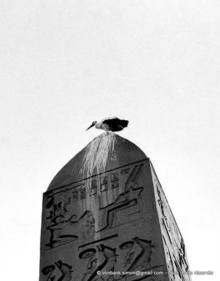 [NB079-1973-27] Louxor - Temple d'Amon-Rê : Ibis posé sur le sommet pyramidal (benben) de l'obélisque (Ramsès II)