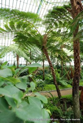 [NU900c-2012-0043] B - Bruxelles - Laeken : Serres royales - Jardin d'hiver