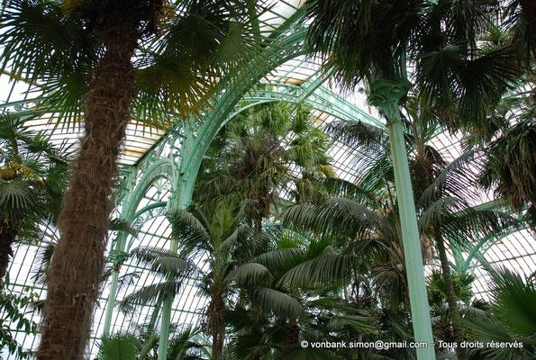 [NU900c-2012-0075] B - Bruxelles - Laeken : Serres royales - Jardin d'hiver