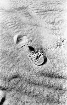 [NB049-1978-58] Désert - Empreintes de scarabée - Empreinte d'homme