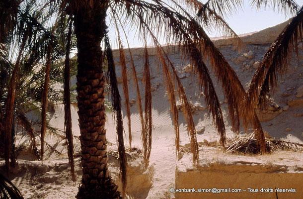 [044-1978-24] El Oued