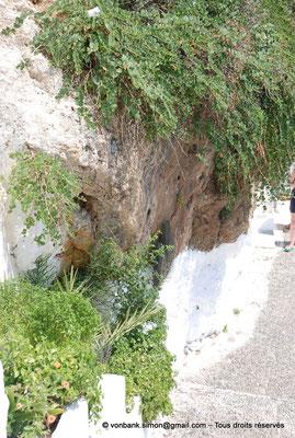 [NU900x-2013-0121] Crète - Chrysoskalítissa : Végétation à flanc de falaise le long de l'escalier d'accès au monastère (Capriers, ...)