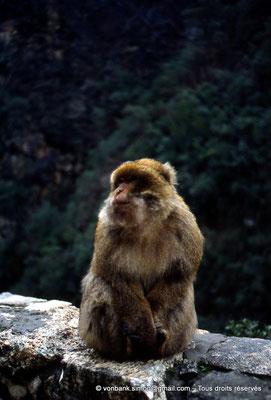 [012-1984-02] Gorges de Kherrata - Magot