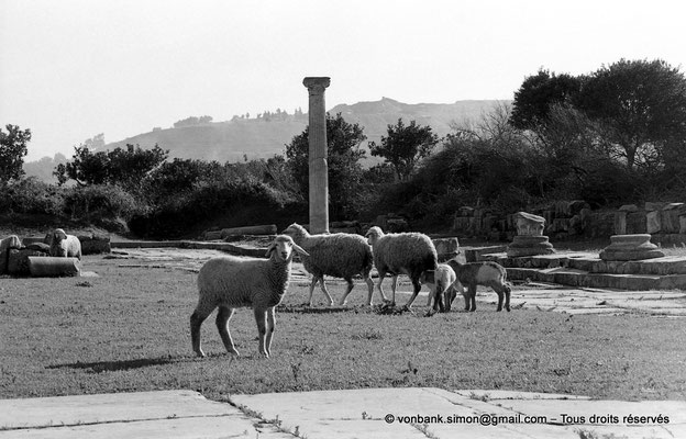 [NB028-1978-09] Annaba (Hippo Regius) : Forum