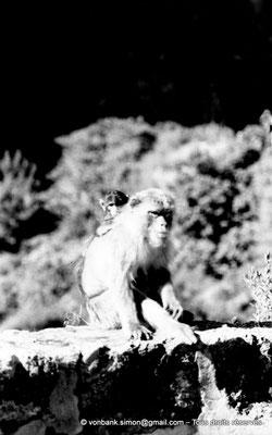 [NB055-1978-24] Gorges de Kherrata - Magots