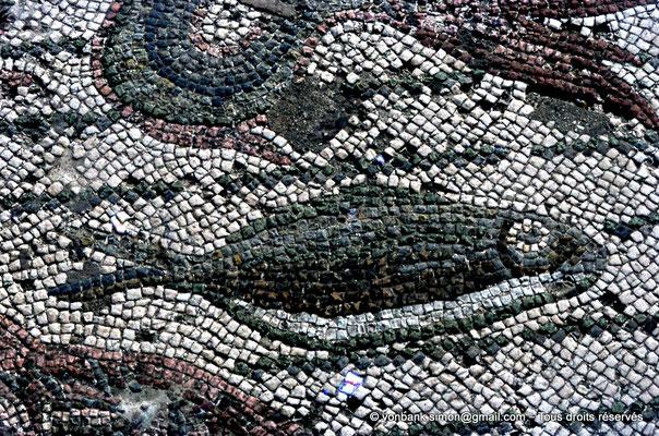 [072-1978-08] Annaba (Hippo Regius) : Poisson (Détail de la mosaïque du triomphe d'Amphitrite)