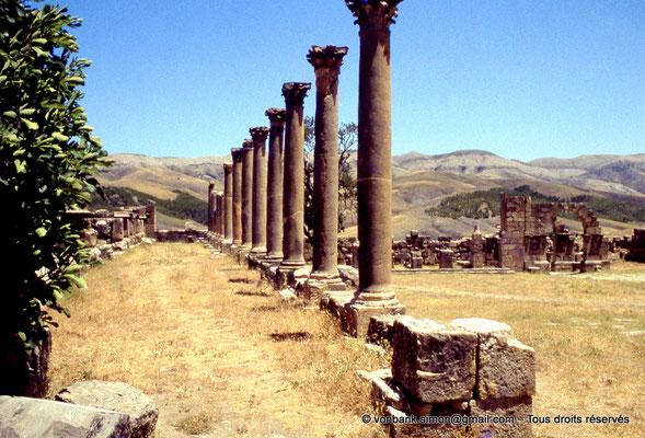 [070-1978-18] Djemila (Cuicul) : Place des Sévères (Nouveau forum) - Colonnade du portique Nord  - En arrière-plan, l'arc de l'Est