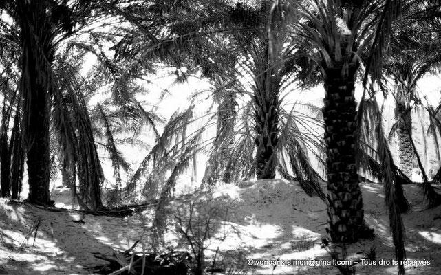[NB023-1978-20] El Oued