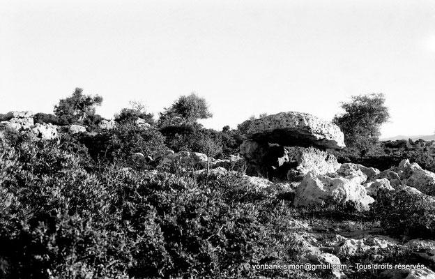 [NB025-1978-55] Roknia : Oliviers et dolmen