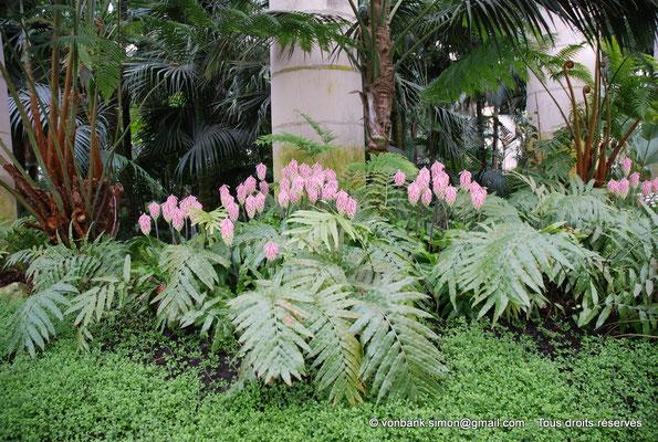 [NU900c-2012-0231] B - Bruxelles - Laeken : Serres royales - Jardin d'hiver