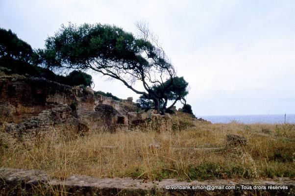 [073-1978-37] Tipasa de Maurétanie