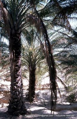 [044-1978-21] El Oued