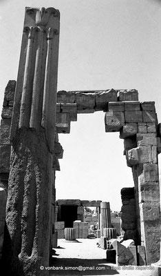 """[NB078-1973-42] Karnak - Ipet-Sout : Le """"lys"""", la plante héraldique de Haute-Égypte (Thoutmôsis III)"""