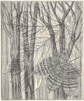 Höft-Baumgardt, Hubert, Man sieht den Wald vor Bäumen nicht, Kupferstich, 2010, ea, 17x14 cm / 60 Euro