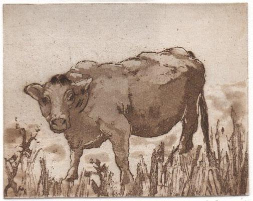 Drope, Götz, Kuh, Radierung-Aquatinta, 2015, 10x12,5 cm / 60 Euro