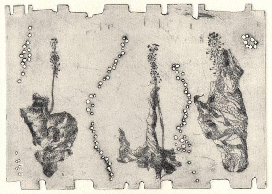 Eberle, Dagmar, Pflanzliches, Kaltnadel-Prägung, 13,5x18,5 cm / 60 Euro