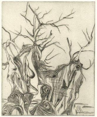 Eberle, Dagmar, Olivenbäume, Radierung, 19,5x16 cm / 40 Euro