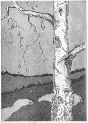 Kramer, Rotraut, Landschaft mit Birke, Radierung-Aquatinta, 2008, ea, 19,5x14 cm / 80 Euro