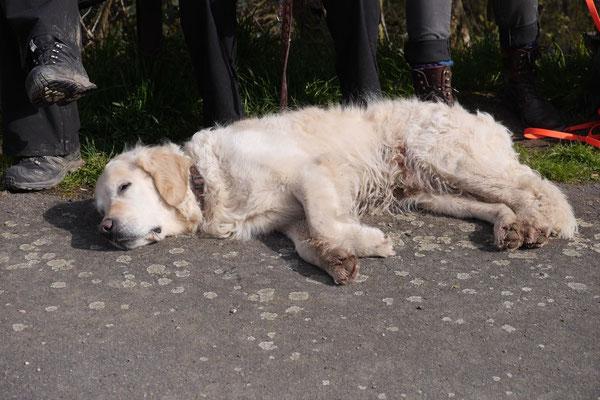 Rheingau Ostern,T-Dogs,3.-6.4.2015 Foto Nr.26