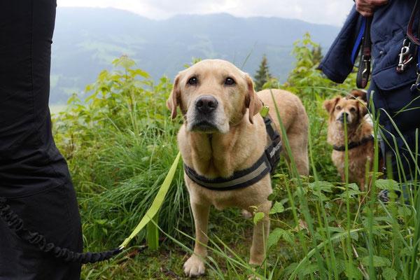 Allgäu,T-Dogs,26.-30.5.2015, Foto Nr.9