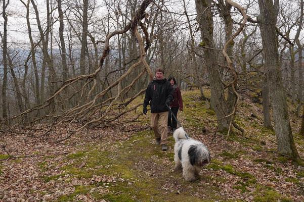 Rheingau Ostern,T-Dogs,3.-6.4.2015 Foto Nr.34