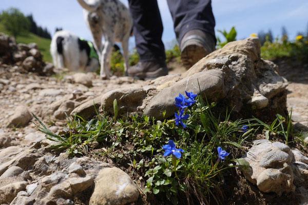 Allgäu,T-Dogs,26.-30.5.2015, Foto Nr.25