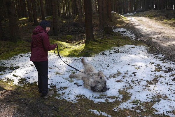 Rheingau Ostern,T-Dogs,3.-6.4.2015 Foto Nr.25