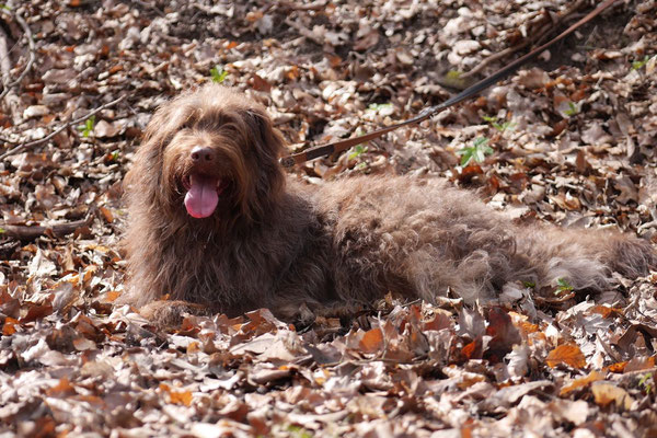 Rheingau Ostern,T-Dogs,3.-6.4.2015 Foto Nr.5