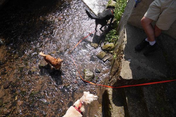 Lindenfels mit Picknick, T-Dogs, 14.6.2015, Foto Nr.2