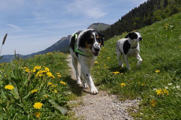 Allgäu,T-Dogs,26.-30.5.2015, Foto Nr.26