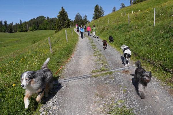 Allgäu,T-Dogs,26.-30.5.2015, Foto Nr.16