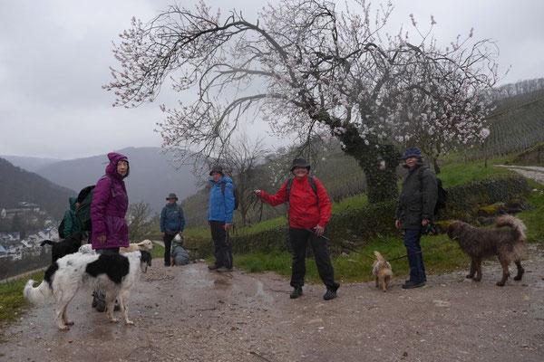 Rheingau Ostern,T-Dogs,3.-6.4.2015 Foto Nr.11