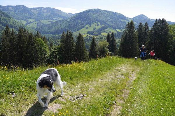 Allgäu,T-Dogs,26.-30.5.2015, Foto Nr.33