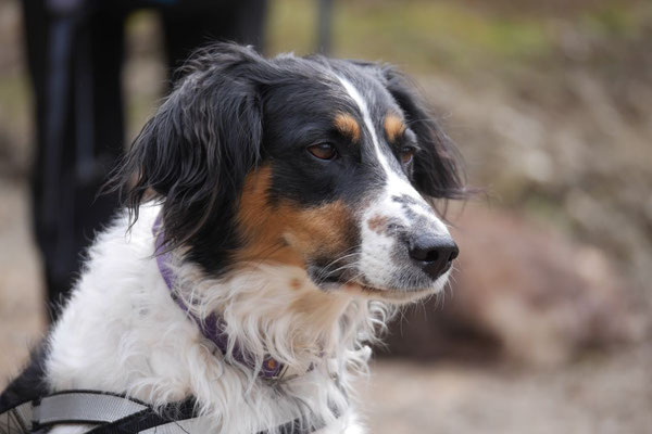 Rheingau Ostern,T-Dogs,3.-6.4.2015 Foto Nr.7