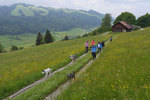 Allgäu,T-Dogs,26.-30.5.2015, Foto Nr.5