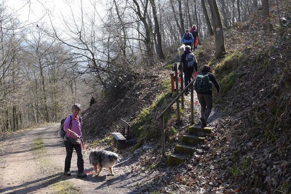 Rheingau Ostern,T-Dogs,3.-6.4.2015 Foto Nr.17