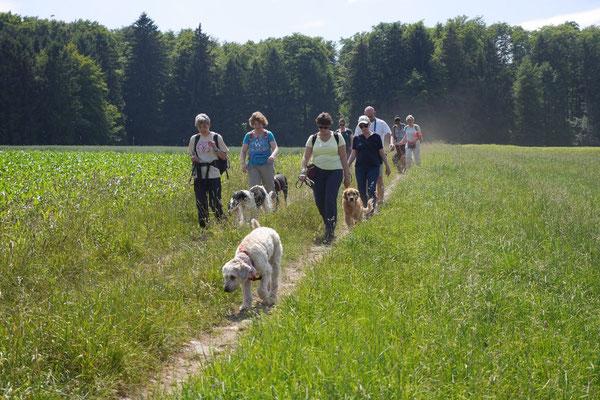 Lindenfels mit Picknick, T-Dogs, 14.6.2015, Foto Nr.13