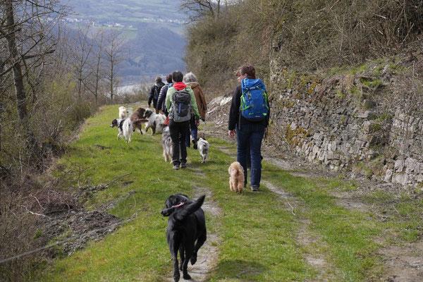 Rheingau Ostern,T-Dogs,3.-6.4.2015 Foto Nr.8