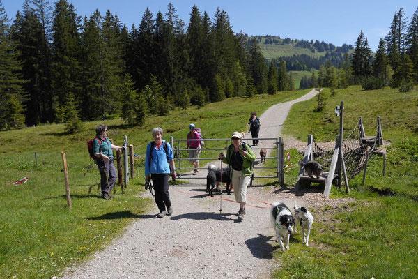 Allgäu,T-Dogs,26.-30.5.2015, Foto Nr.28