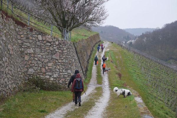 Rheingau Ostern,T-Dogs,3.-6.4.2015 Foto Nr.10